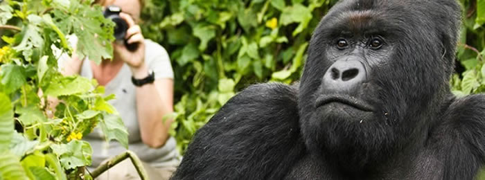 3 DAYS GORILLA TRACKING SAFARI BWINDI
