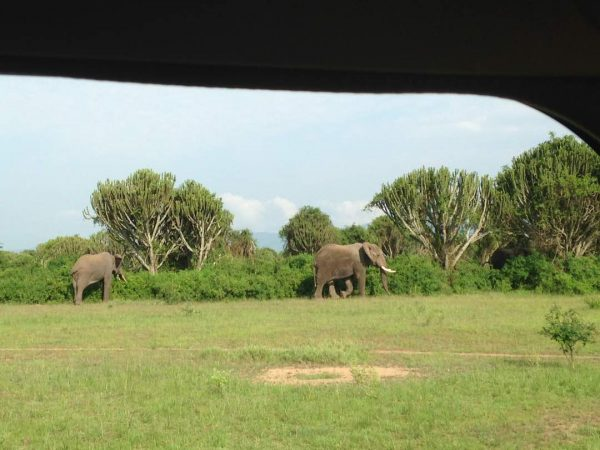 Elephants Bowi tours
