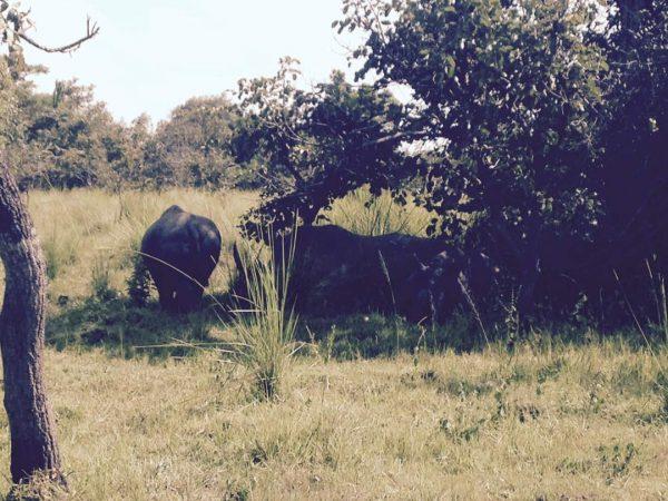 bowitours white rhinos