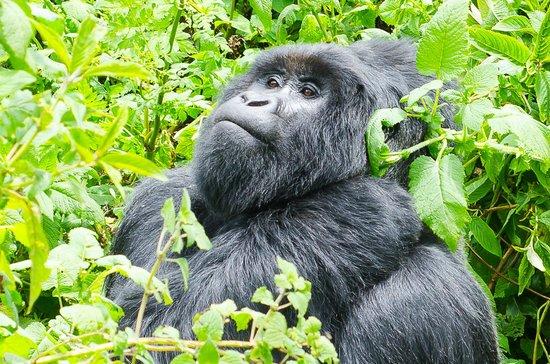 mgahinga-gorilla-national