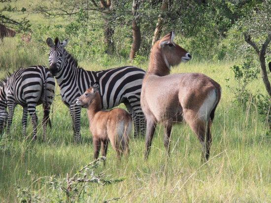 wildlife-im-lake-mburo